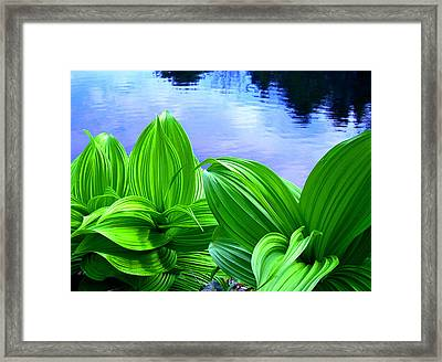 Following Framed Print by Sybil Staples