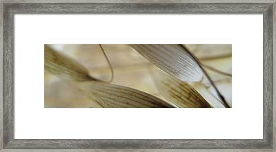 frOm The Opal Valley knOws Framed Print by Ofer MizraChi