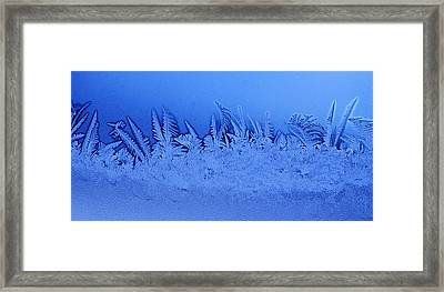 Frost Forest Framed Print