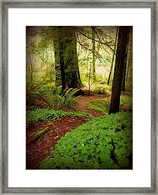 Giants Pathway Framed Print by Cindy Wright