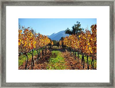Glowing Rows Framed Print by Kristine Ellison