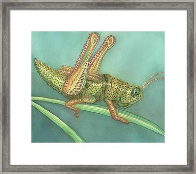 Grasshopper Framed Print by Anne Havard