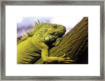 Green Iguana Of Nature Park Framed Print by Victor Estevez