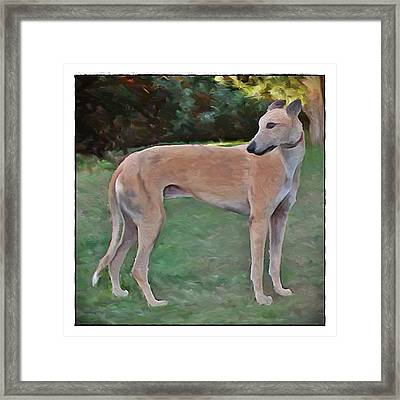 Greyhound Standing Rendered 103 Framed Print by Terry Mulligan