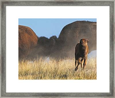 Head On Framed Print by Sandy Sisti