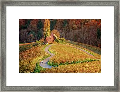 Heart Shaped Wine Road In Slovenia In Autumn, Herzerl Strasse Framed Print