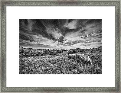 Heather Hills I Framed Print