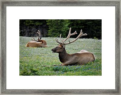 Hey Check This Rack Out Framed Print by Kevin Munro