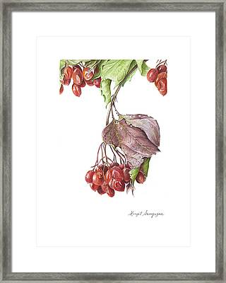Framed Print featuring the painting Highbush Cranberry  by Margit Sampogna
