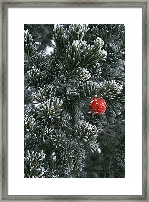 Holiday Ornament Hanging On Snow Dusted Framed Print by Kate Thompson
