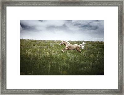Horsepower Framed Print by Arman Zhenikeyev - professional photographer from Kazakhstan