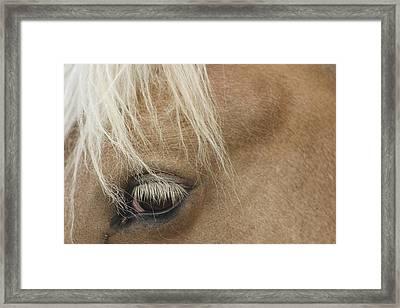 Horse's Eye Framed Print by Dagmar Batyahav