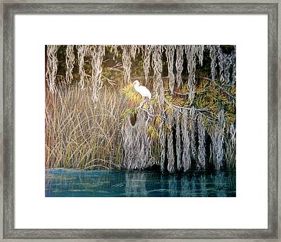 Framed Print featuring the pastel Ibis At Wakulla Springs by Jan Amiss