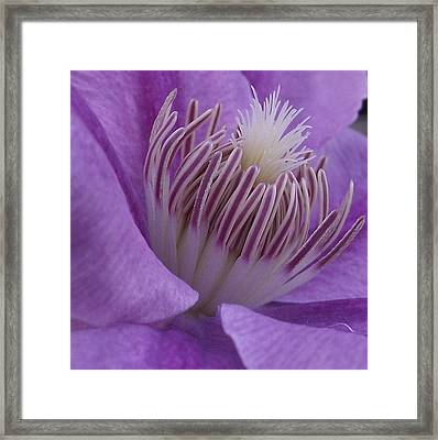 Inner Beauty Framed Print by Erika Kennedy