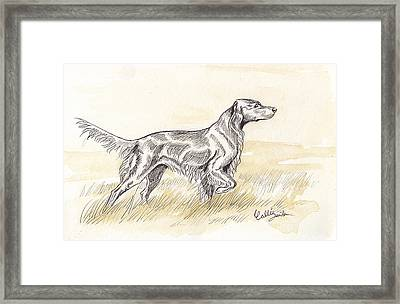 Irish Setter Sketch Framed Print by Callie Smith