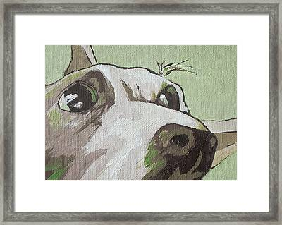 Jack Russells Never Stay Still Framed Print by Sandy Tracey