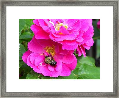 Jc And Bee Framed Print