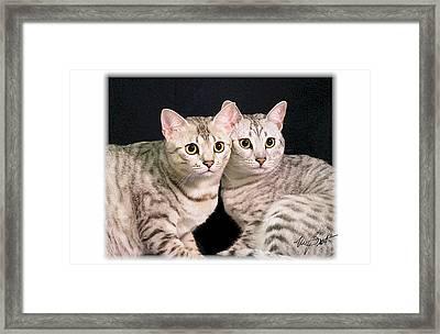 Kissing Cousins Framed Print by Maxine Bochnia
