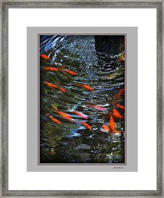 Framed Print featuring the photograph Koi Swirl by Linda Olsen