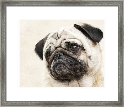 L-o-l-a Lola The Pug Framed Print