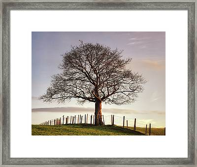 Large Tree Framed Print