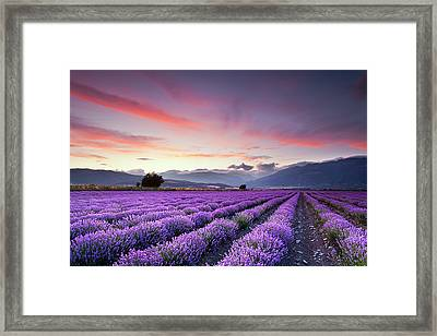 Lavender Field Framed Print by Evgeni Dinev Photography