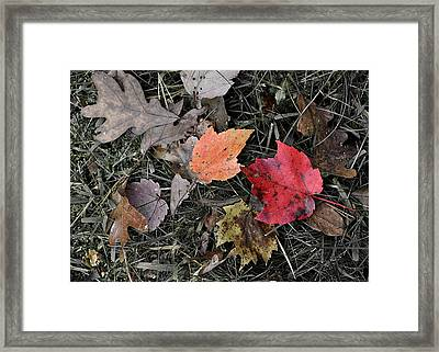Leaves Are Falling Framed Print by JAMART Photography