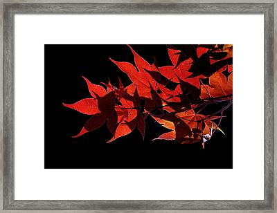 Leaves Of Red Framed Print by Heather Applegate