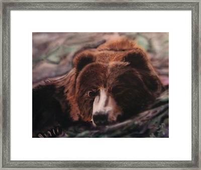Let Sleeping Bears Lie Framed Print by Frank  Bingo