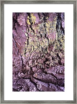 Lichen On Tree Bark Framed Print by John Foxx