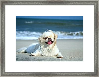Lifes A Beach Framed Print by Ania M Milo