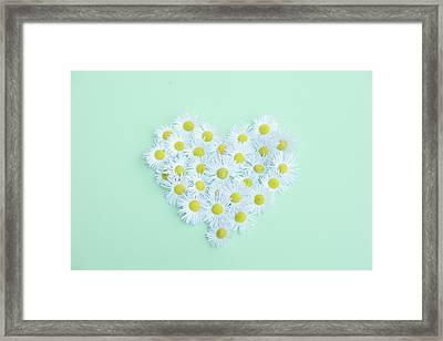 Little Daisy Framed Print by Poppy Thomas-Hill