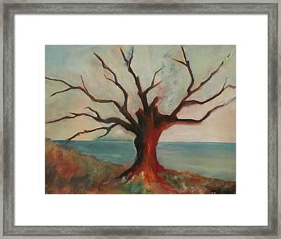 Lone Oak - Gulf Coast Framed Print by Deborah Allison