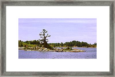 Lone Tree 3 Db  Framed Print