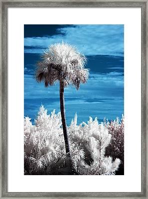 Lonesome Palm Framed Print by Bob Pomeroy