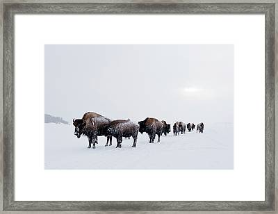 Long Brown Line Framed Print