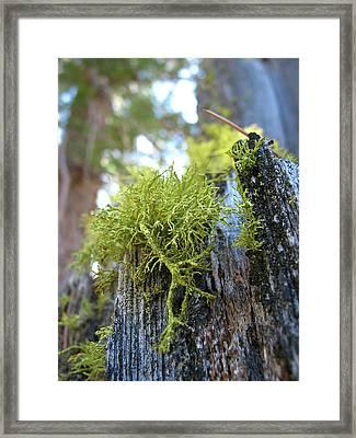 Macro Life Framed Print