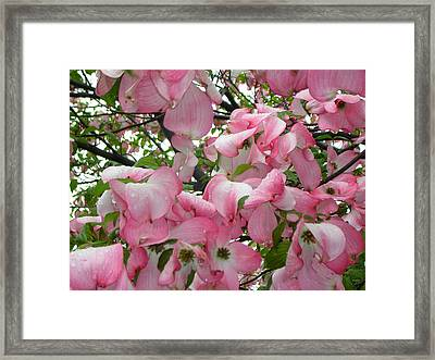 Magnolias Framed Print by Heather Weikel