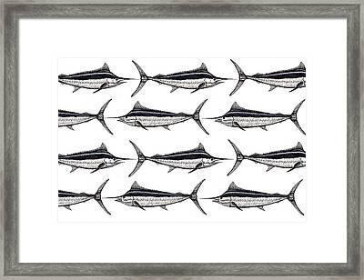Many Marlin Framed Print by Jay Talbot