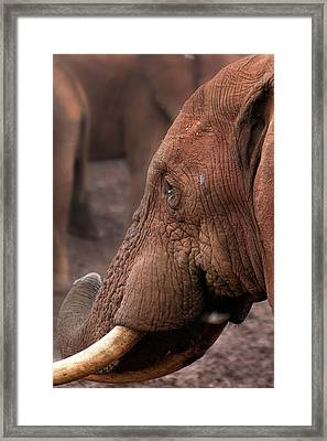 Matriarch - Matriarche Framed Print