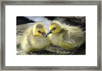 Mini Quackers Framed Print
