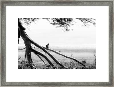 Monkey Alone On A Branch Framed Print by Darcy Michaelchuk