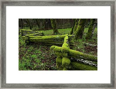 Mossy Fence 4 Framed Print