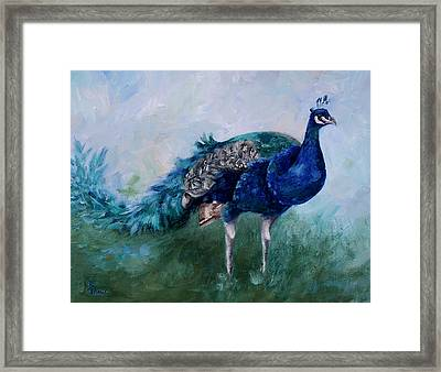 Mr. Peacock  Framed Print
