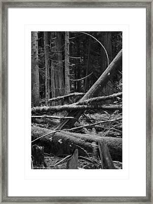 Natural Forest Framed Print by J D Banks