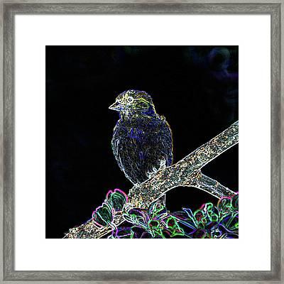 Neon Goldfinch Framed Print by Betty LaRue