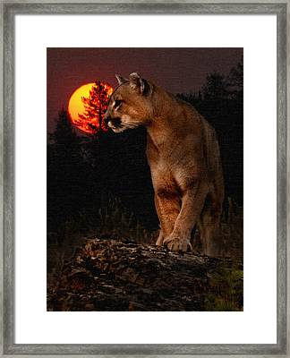 Night Of The Cougar Framed Print by Wade Aiken
