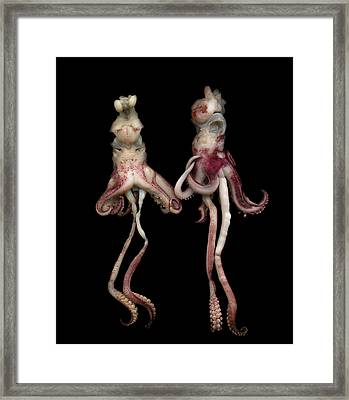 Octopus Framed Print by Photograph by Magda Indigo