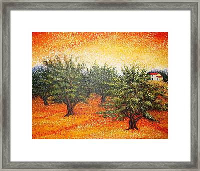 Olive Field In The Sunset Framed Print
