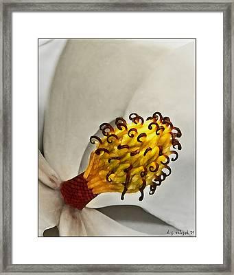Painted Magnolia Framed Print by Daniel G Walczyk